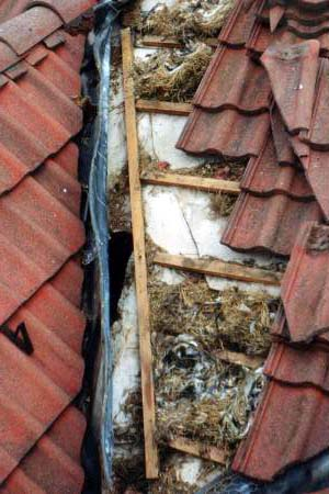 Birds can build their nests under the Marley tiles if they are               not properley sealed.